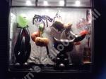 Shop display for halloween night